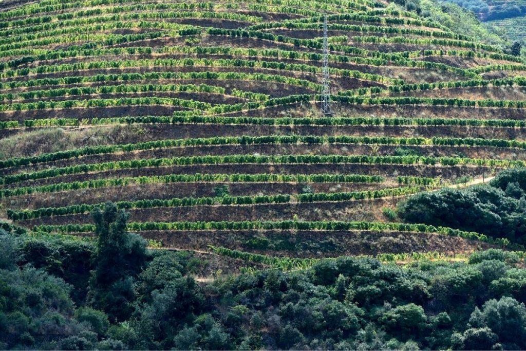 vignes de Porto vallée du Douro